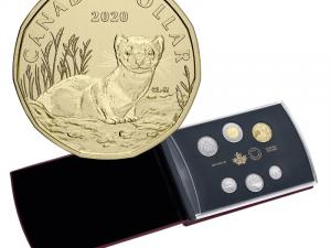 2020 Specimen Set - Black-Footed Ferret